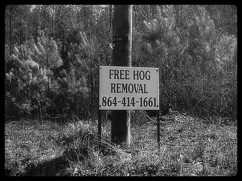 Hog Removal