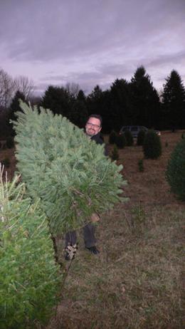 Tree_haul